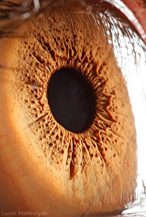 Beautiful Eyes Suren Manvelyan