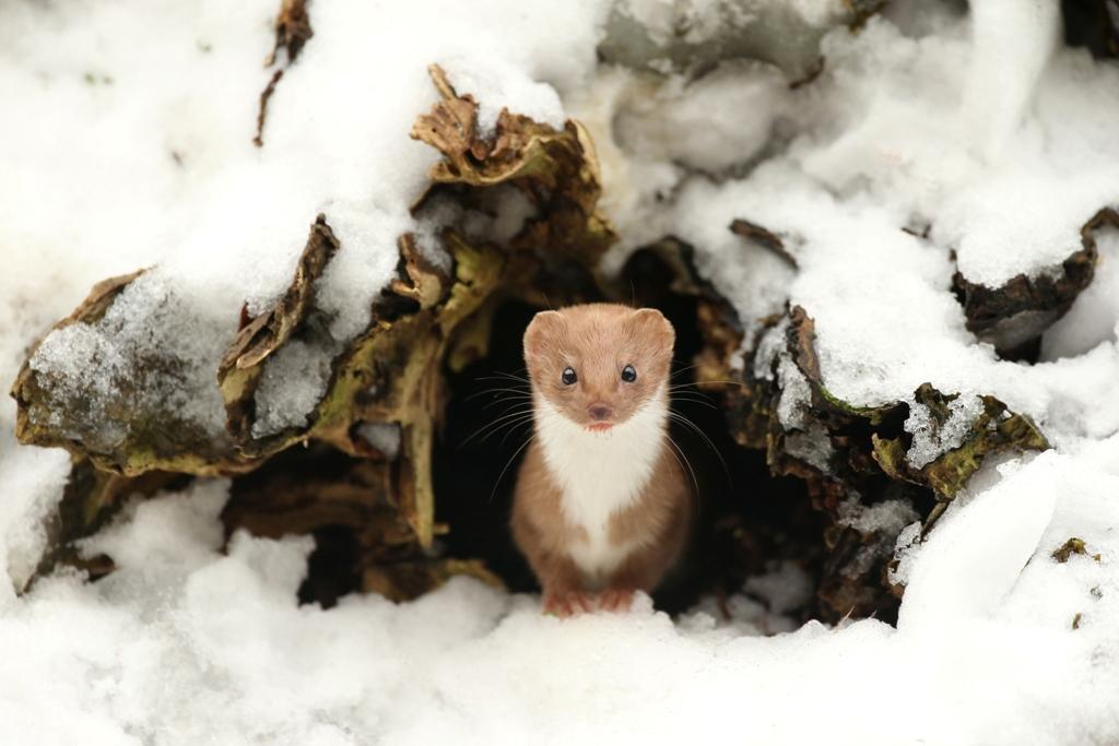 2016 British Wildlife Photography Awards Winning Photographs