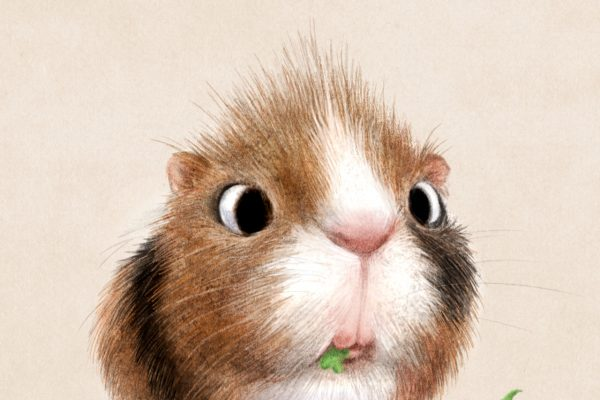 Overwhelmingly Cute Animal Illustrations by Sydney Hanson