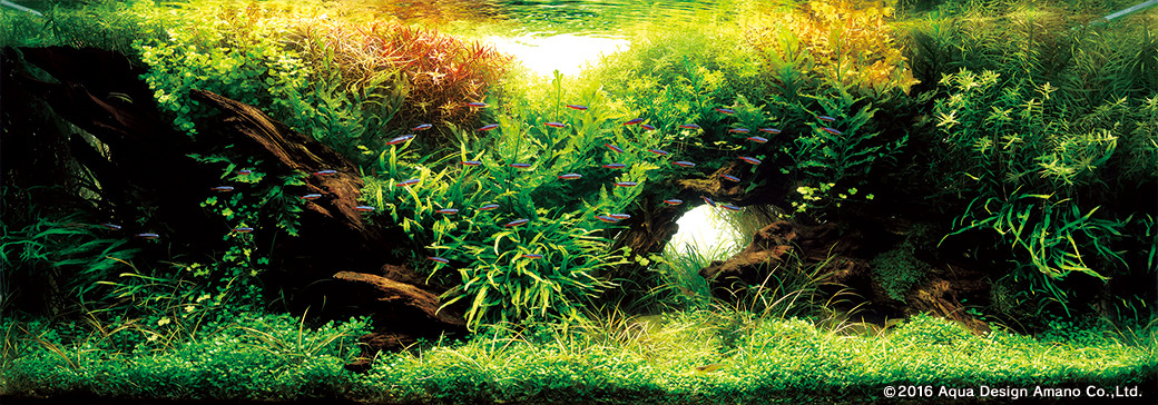 The International Aquatic Plants Layout Contest Winning Works 2016