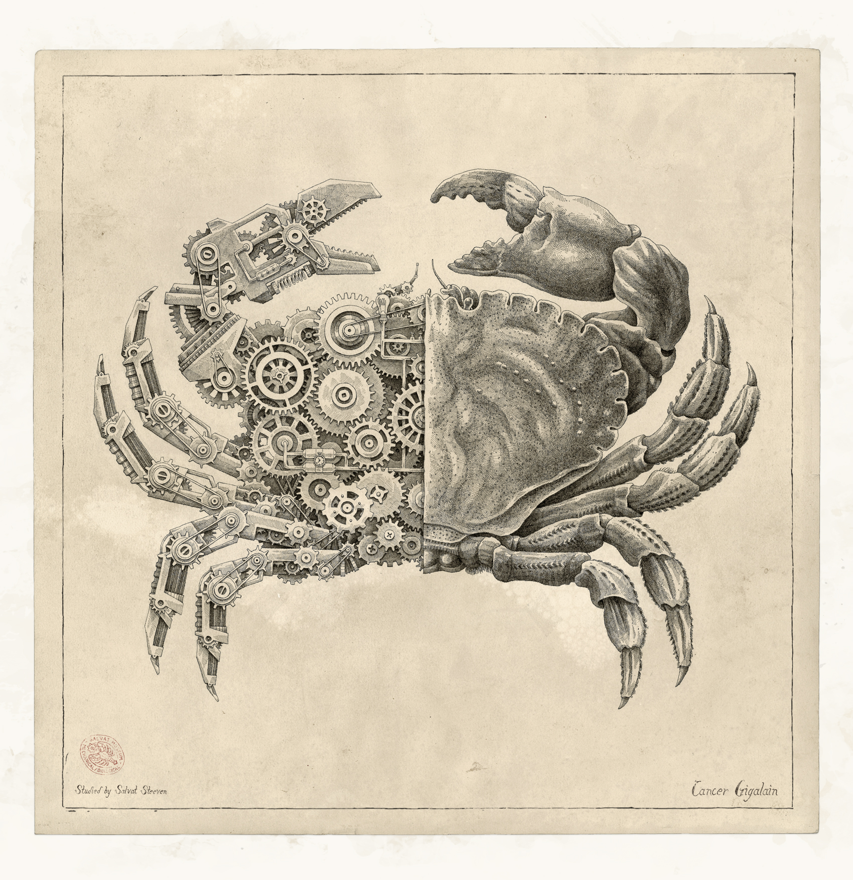 Crustacean Study by Steeven Salvat